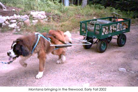 Extra Large Dog Wagon