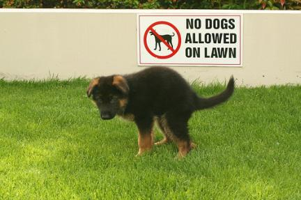 GSD Not Allowed