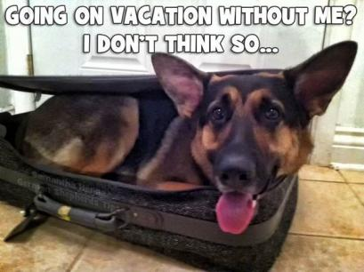 OTHER FUN AND FUNNY DOG HUMOR Maybe Not GSD But Worth The Smile
