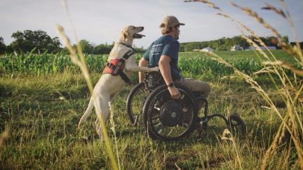 Service Dog Wheel Chair
