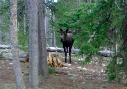 Bullwinkle Visiting 2014-06-03