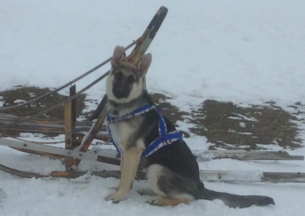 Titus Sled Harness 2014-01-03