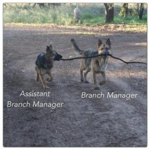 GSD Branch Manager