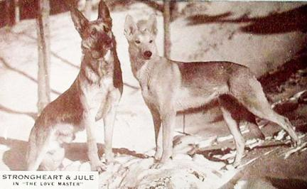 StrongHeart & Julie the Movie Star Dogs